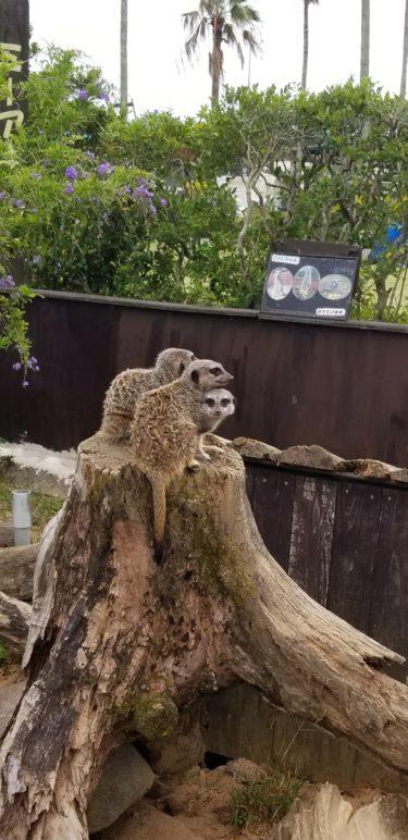宮崎市フェニックス自然動物園に行ってきました♪