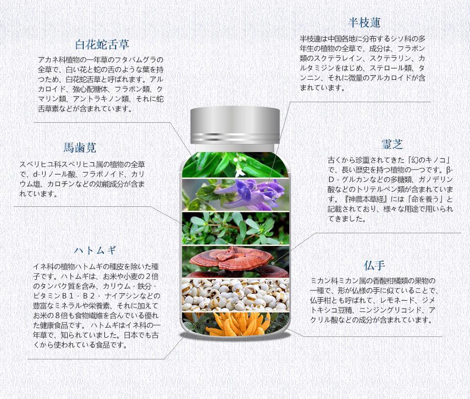 白花蛇舌草 原料